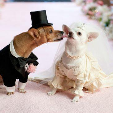 Les 5 mariages les plus insensés