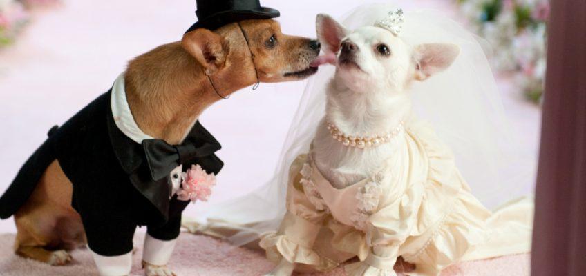 5 mariages les plus insensés